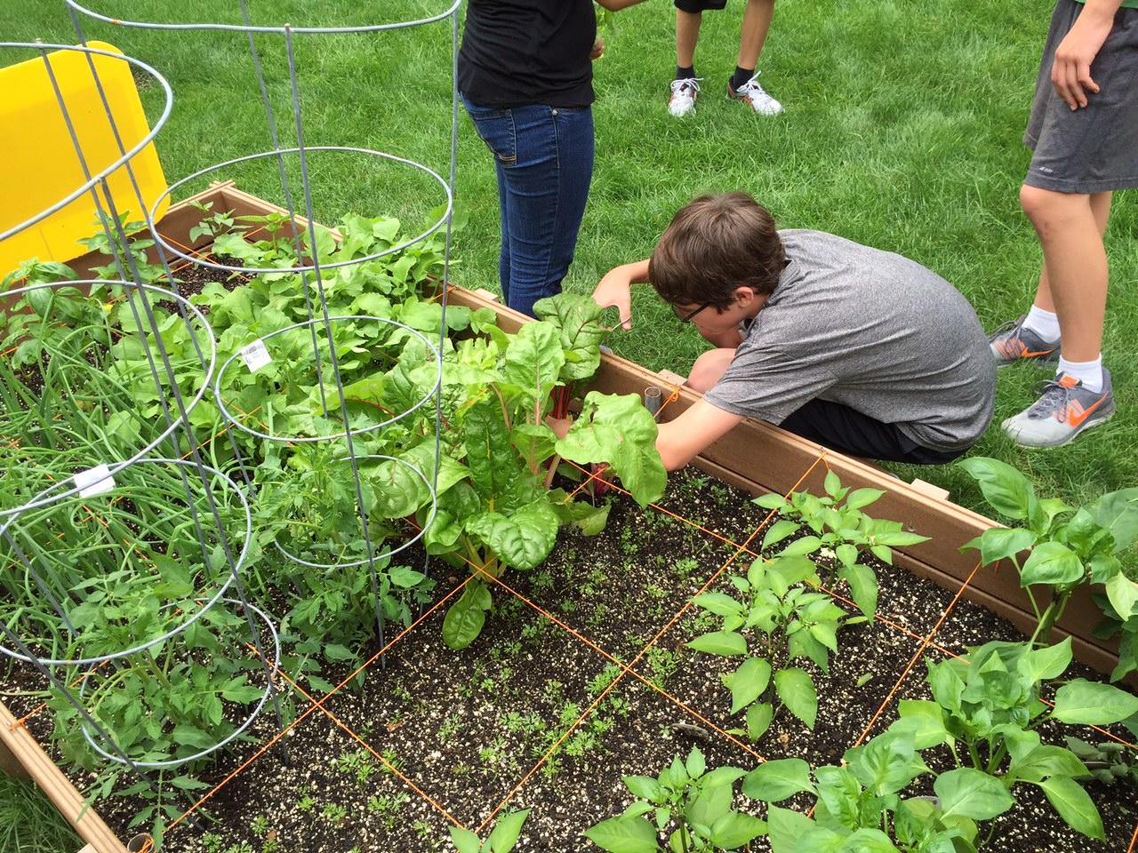 Food Pantry Garden | St. Jane de Chantal Parish